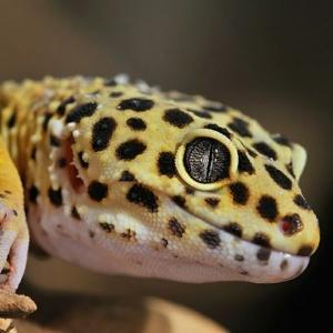 edgardluis-reptiliano