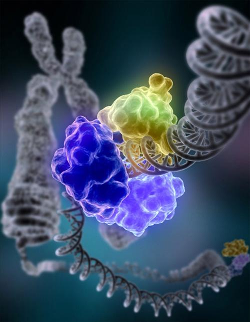 ADN dañado siendo reparado por la enzima ligasa. Imagen de Tom Ellenberger, Washington University School of Medicine in St. Louis.