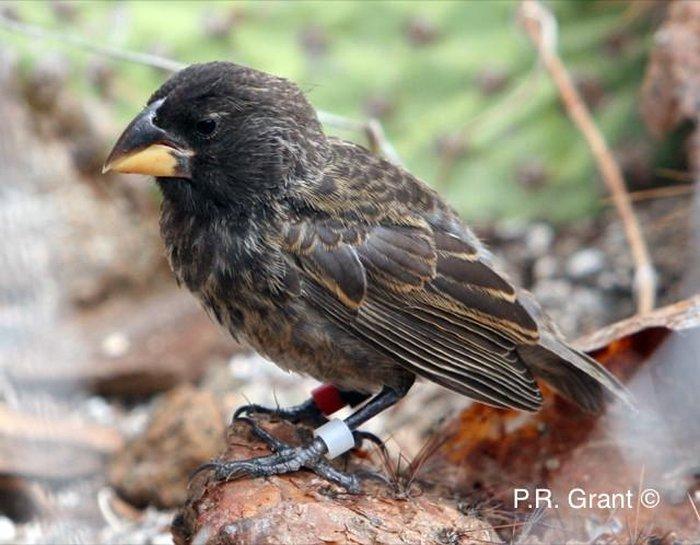 Big Bird, nueva especie de pájaro.