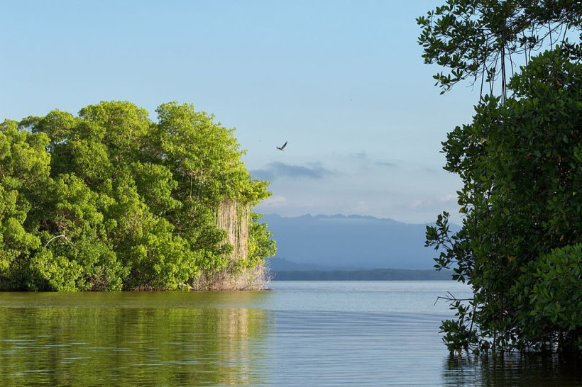 Parque Nacional Laguna de Tacarigua.